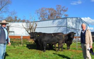 Onslow 2017 Bull Sale