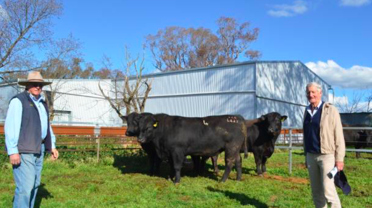 Onslow Angus co-principal Doug Tozer and Nigel Campbell, Kinloch Angus, Perth, Tasmania with Onslow Design L426 he purchased for $17,000. Mr Campbell has been an Onslow Angus client for the past 16 years.