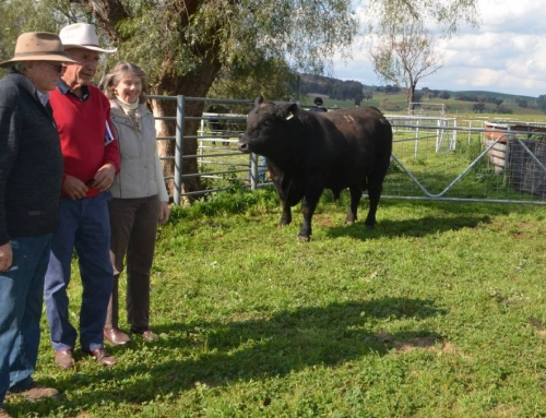 2019 Onslow Bull Sale Report