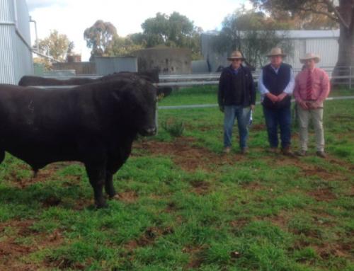 2020 Onslow Bull Sale Report
